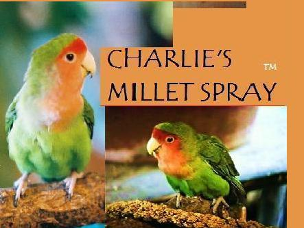 Charlies Millet Spray